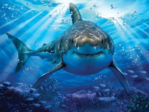 #Большая белая акула (Great white shark)
