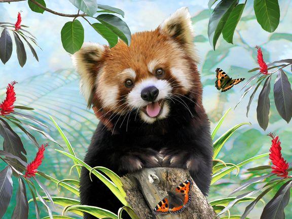 #Красная панда (Red panda)